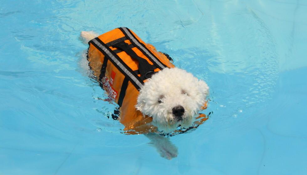Husk at hunden skal ha redningsvest ombord i båten! FOTO: NTBScanpix