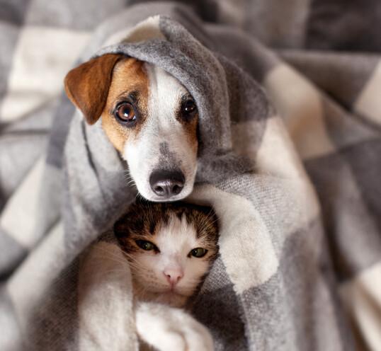 HOME SWEET HOME: Bare lukk øynene og lukt på teppet - da er det akkurat som å være hjemme. NTBScanpix
