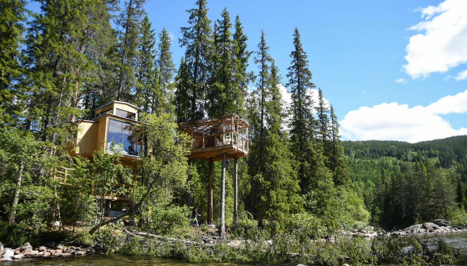 TRETOPPHYTTE: Hva med å tilbringe noen av dagene i sommer i toppen av et tre? Foto: Å Camp
