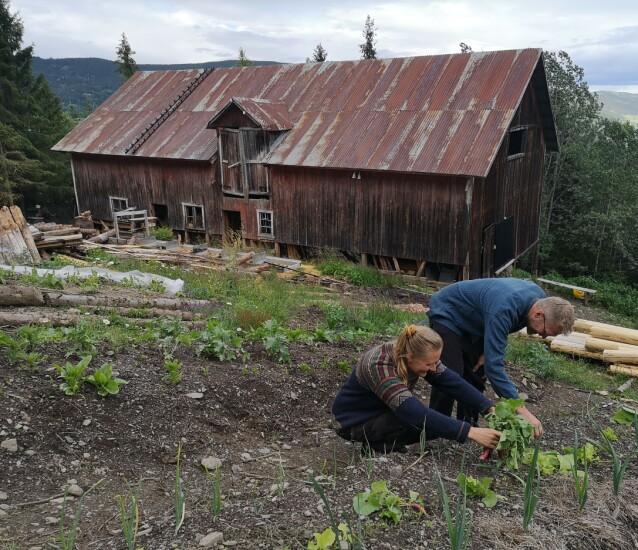 MYE JOBB: Det er mye å jobbe med på den falleferdige gården, men det er enklere når man er to. FOTO: Privat