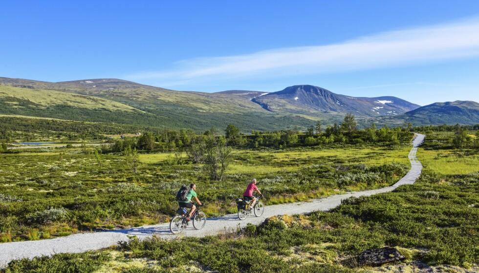 <strong>NORGE PÅ SITT FLOTTESTE:</strong> På Dovrefjell er det flotte sykkelruter rett gjennom nasjonalparken. FOTO: Torild Moland