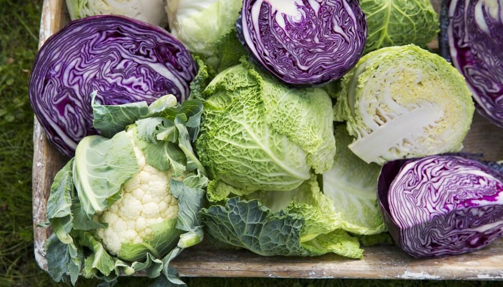 Tips! Grønnkål er supermat, med masse vitaminer og mineraler. Men også annen kål gir deg godt, sunt påfyll av antioksidantene betakaroten, vitamin E og C samt tiamin, riboflavin, niacin, vitamin B6, kalsium, jern, kalium, mangan, sink og selen. FOTO: Sophie Håkansson