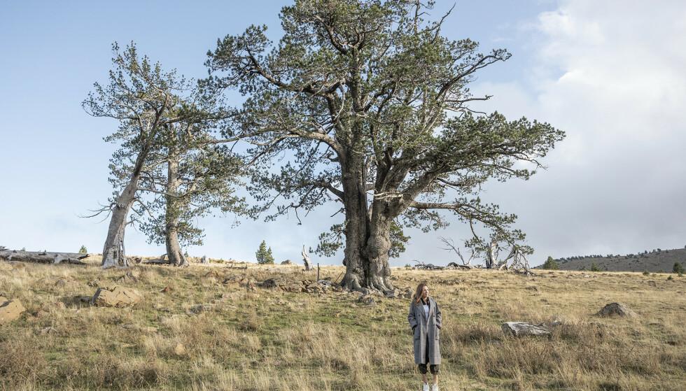 WHITE PINE: KORRES-forskerne oppdaget en kraftfull anti-aldringsaktiv i de greske ormehamsfurutrærne.