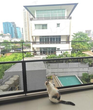 STORBYKATT: Ina Tangen synes å ha taklet flyttingen til storbyen svært godt. FOTO: Privat