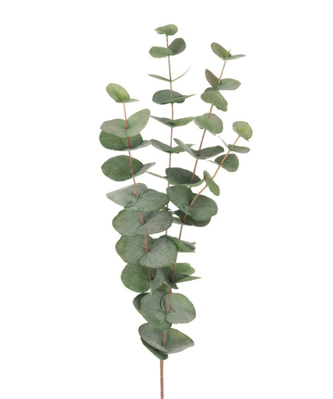 Eucalyptus, fås bla hos Plantasjen, fra kr 79