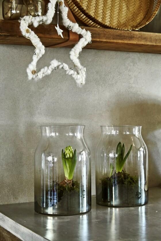Tips! Når du setter planter i glass som her, blir de nesten som en installasjon i seg selv. FOTO: Lene Samsø