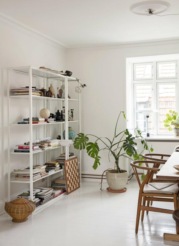 Planter understreker det naturlige i innredningen. Her skaper en stor vindusblad i krukke på gulvet samspill mellom fargene i reolen og «Y-stolene» i naturtre. Reolen er fra Ikea, og innholdet er en miks av loppefunn og ferieminner. Tips! Dyrt og rimelig i kombinasjon er en vinner når du velger omhyggelig. Billig Ikea mot dyr Wegner-design framstår lett og vakkert sammen. FOTO: Kira Brandt