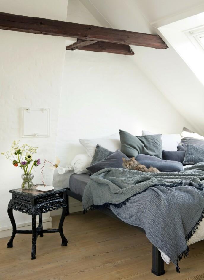 Bitte litt rot i form av innbydende tepper og puter skaper trivsel for flere enn katten. Sengen er fra Hay. FOTO: Kira Brandt