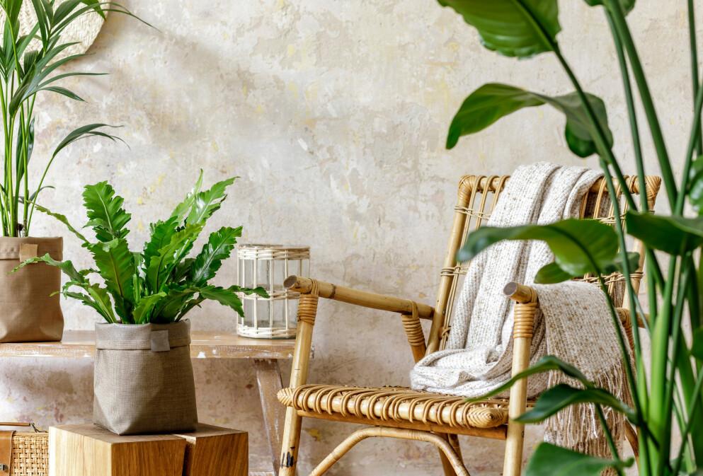 NY SESONG: På tide å gjøre hjemmet klar for vår? Foto: NTB