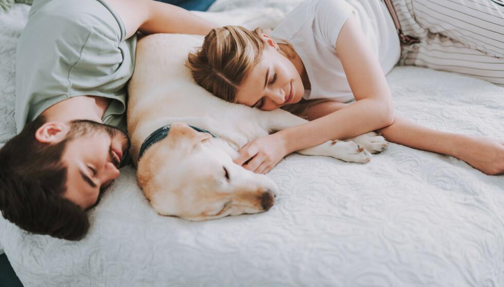 POWERNAP: Det er utrolig viktig for hjernen at vi får nok søvn. Søvnforskere er generelt enige om at de aller fleste voksne trenger minst syv timer søvn om natten. FOTO: NTB