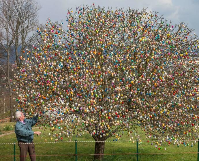 GLAD PÅSK: Hele ti tusen egg fikk plass på treet til familien Kraft i 2014 . FOTO: NTB