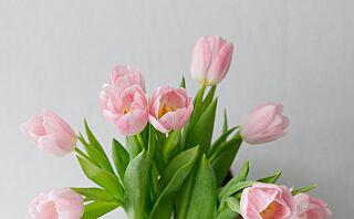 Kan en mynt redde slappe tulipaner?