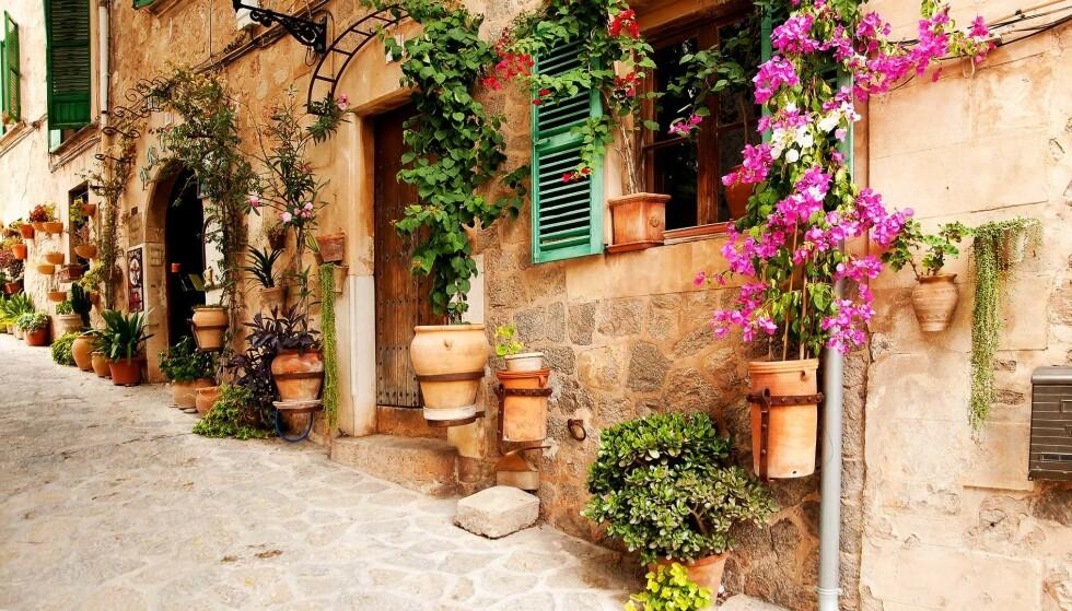 LANDSBYDRØM: I Sierra de Tramuntana-området ligger det herlige små landsbyer spredt i det olivengrønne landskapet. Det blir knapt mer pittoresk! Foto: AETIB