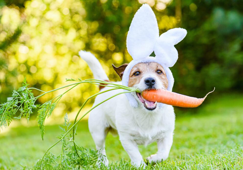 FAMILIEMEDLEM: Klart hunden skal være med på moroa. Men å ha hund er langt fra gratis. FOTO: NTB