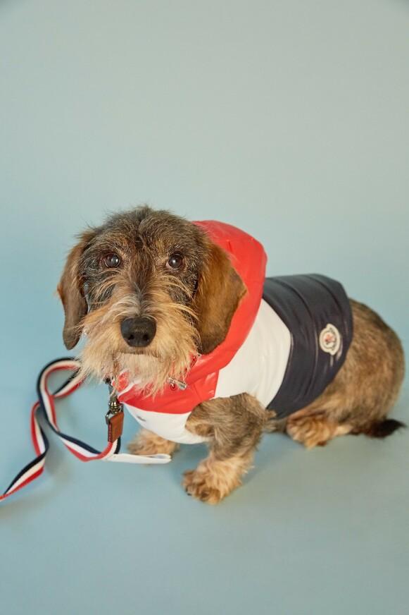 PRAKTISK ELLER UNØDVENDIG? Klær til kjæledyr er omdiskutert. Her fra det franske luksusmerket Moncler sin kolleksjon til hunder. FOTO: SSENSE