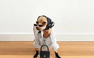 – Man kler ikke opp en hund for hundens skyld