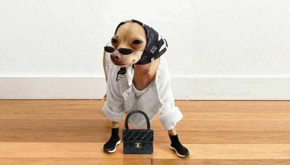 MED PÅ MOTENE: Hunden Boobie Billie omtales som influencer, og har 284 000 følgere på Instagram. FOTO: INSTAGRAM