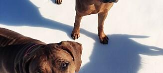 Havanna og Ebba kan redde 16 hundeliv i året