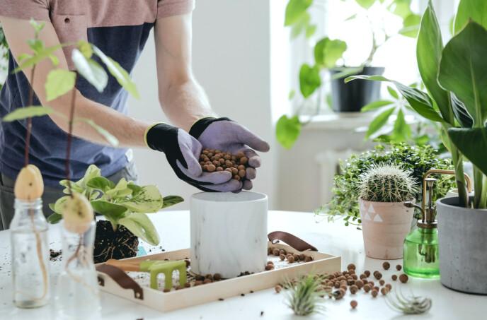 LECAKULER: Lecakuler er lett, porøst og optimalt, og selges hos alle hagesentre. Men det finnes også andre, rimeligere materialer som gir jorda luft. FOTO: NTB