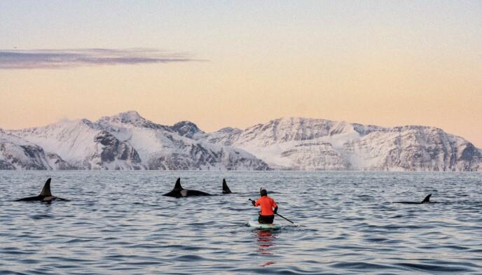 NATUR: I ett med naturen og spekkhuggere er Kari lykkelig. FOTO: Tommy Simonsen