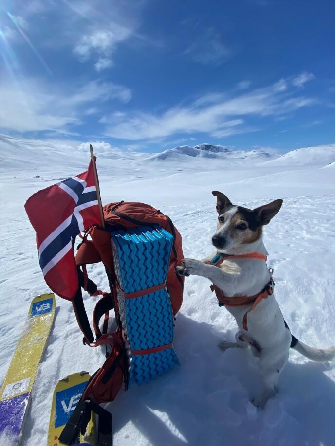 TRULS: Hunden Truls er Karis samboer og reisekompis. FOTO: Kari Schibevaag