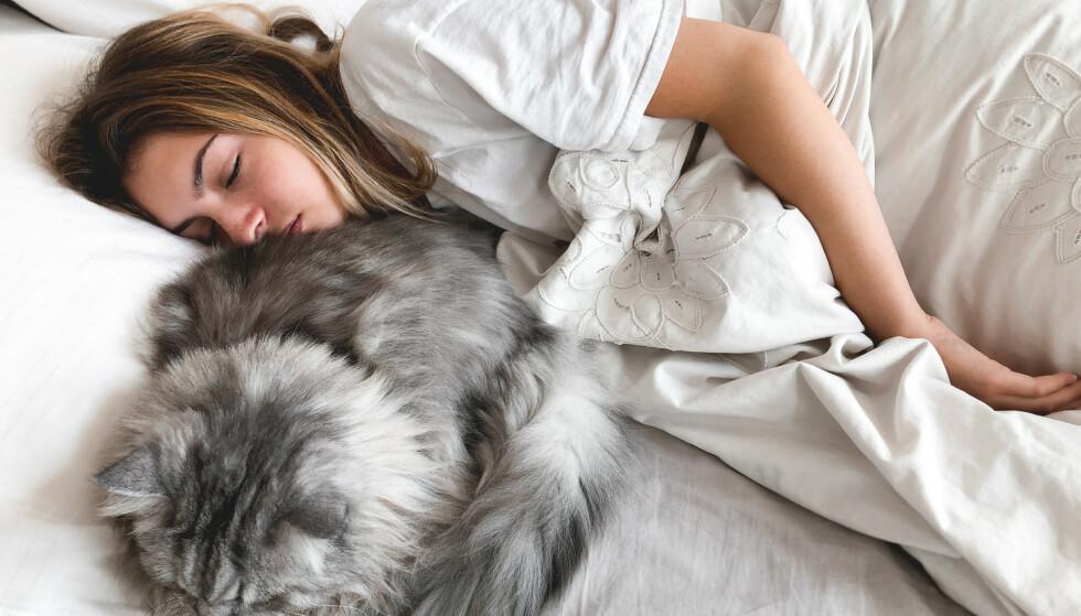 SPIS KVELDSMAT: Ikke gå sulten til sengs. Sult forstyrrer søvn. Spise derfor et lite måltid 1-2 timer før du skal sove.