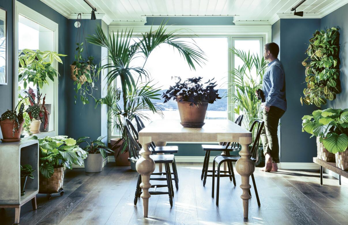 VIKTIG FOR TRIVSELEN: Grønne planter gjør noe med den psykiske helsen vår. Vi blir blant annet mer tilfredsstilte, stressnivået går ned og vi føler oss roligere. FOTO: Plantebonanza/Inger Marie Grini