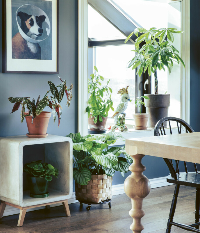 PLANTER I ALLE KRIKER OG KROKER: Et av Anders beste interiørtips er å sette planter i ulike farger, fasonger og former sammen. FOTO: Plantebonanza/Inger Marie Grini
